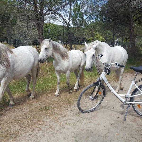 vélo Camargue chevaux